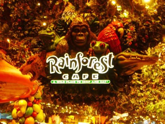 las_rainforest4